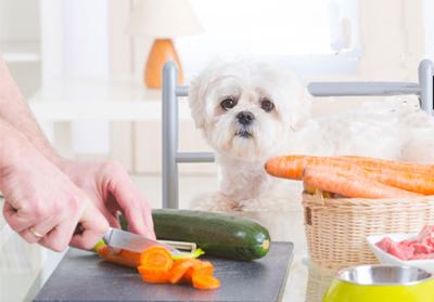 Alimentação Natural para Cães - PetNut