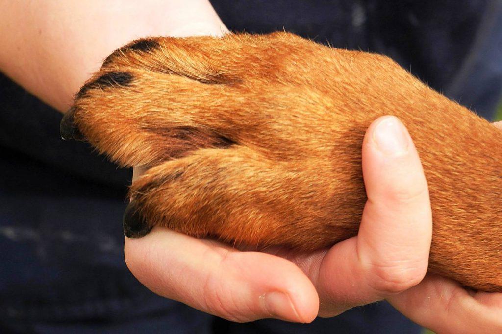 Patas de Cachorro - PetNut