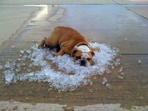 O Verão para os Cães - PetNut