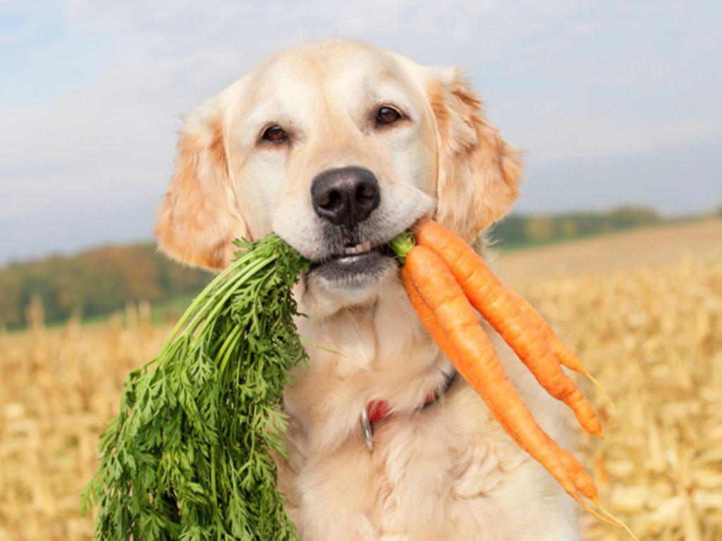 Como introduzir a alimentação natural para cães - PetNut