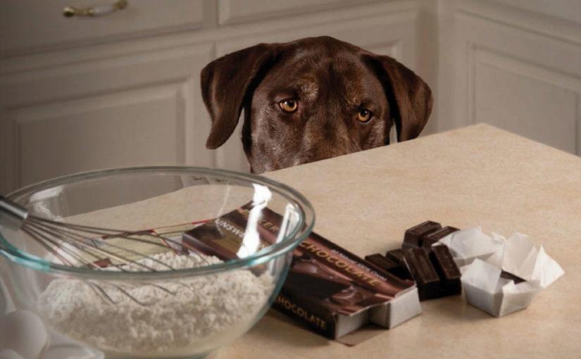 Curiosidades sobre a alimentação dos cães
