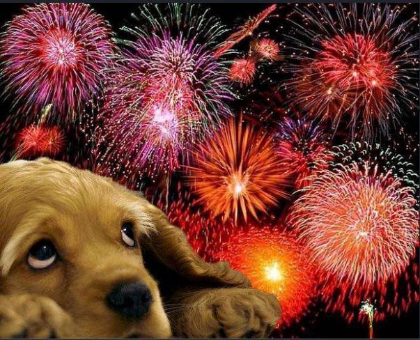 O perigo dos fogos de artifício para seus pets - PetNut